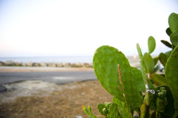 I Fichi d\'India del Salento. Il frutto dell\'amore. La spiaggia di Pescoluse, Torre Vado e le Maldive del Salento, a pochi passi dal B&B Nilosira per un\'estate e una vacanza unica.